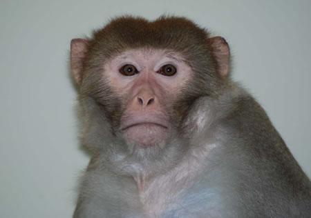 cloned_monkey